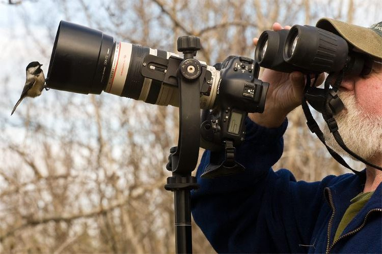 Best-DSLR-Cameras-for-Wildlife-Photography